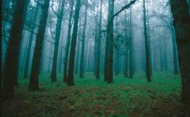 bosque prohibido